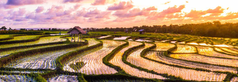 Bali-Rice-Fields-Sunset-iStock_000055009954_Large-2