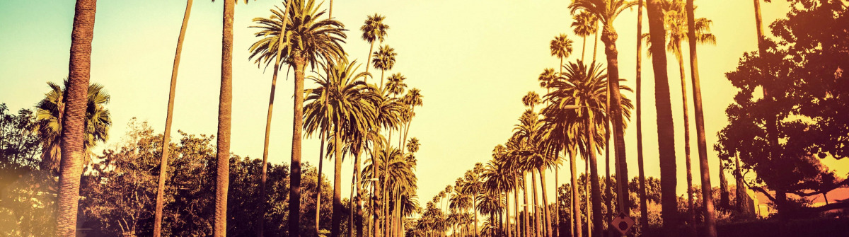 palm-trees-hollywood-los-angeles-istock_000032047156_large-2