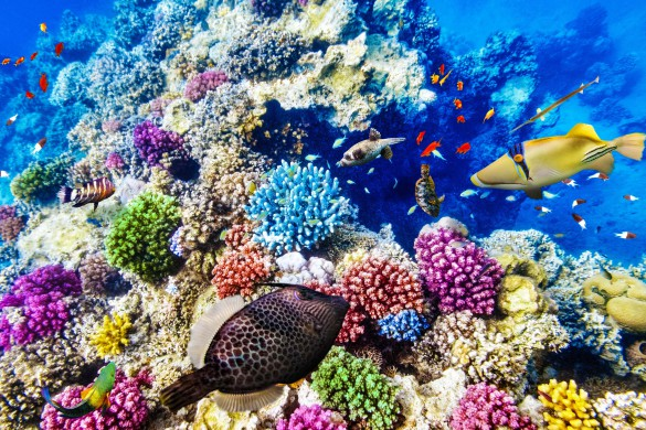 wonderful-and-beautiful-underwater-world-with-corals-and-tropical-fish-shutterstock_261953732-2-585x390