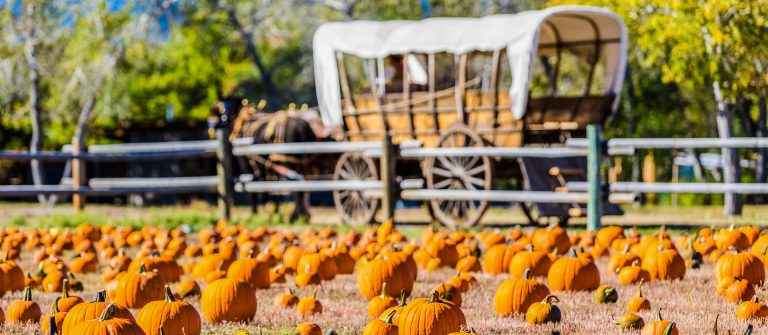 selecting-pumpkin-from-pumpkin-patch-in-early-autumn-shutterstock_222189772-2