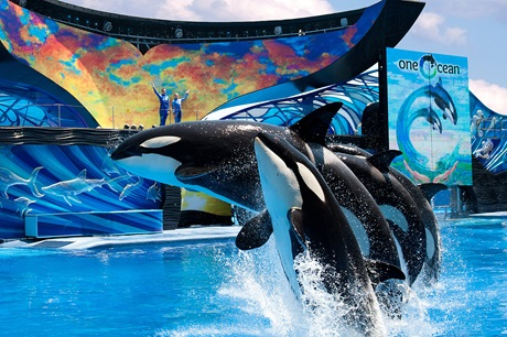 seaworld-one-ocean
