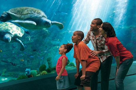 seaworld-turtle-trek