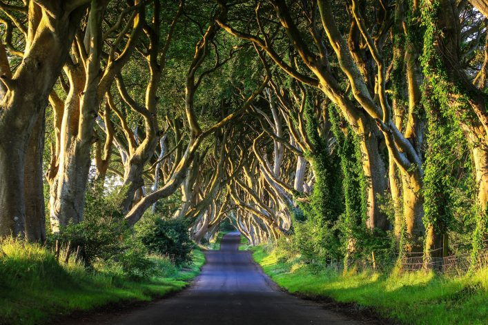 Dark-Hedges-VI-shutterstock_187763780-2