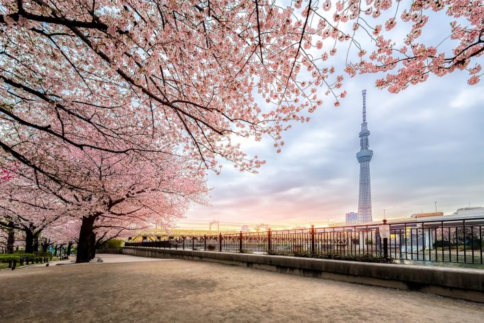 Tokio-Skytree-with-cherry-blossom-EDITORIAL-ONLY-Phattana-Stock-shutterstock_1013716039